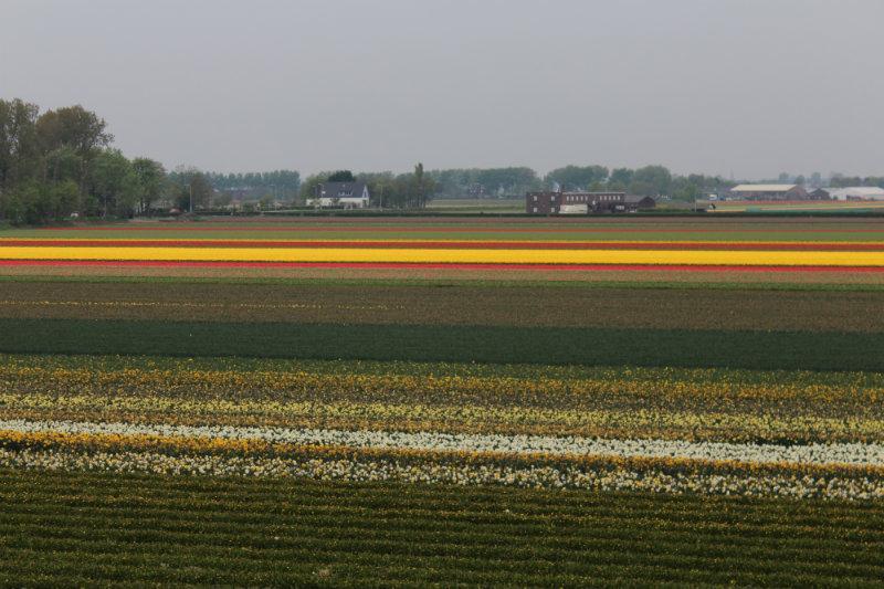 parque das tulipas holanda 2