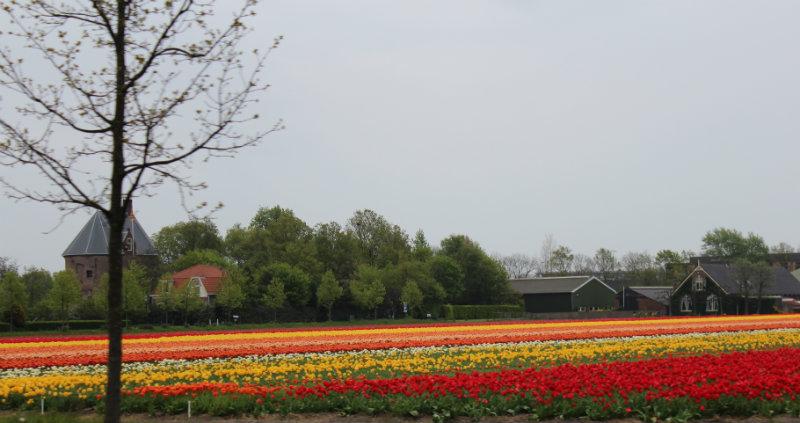 parque das tulipas holanda 4