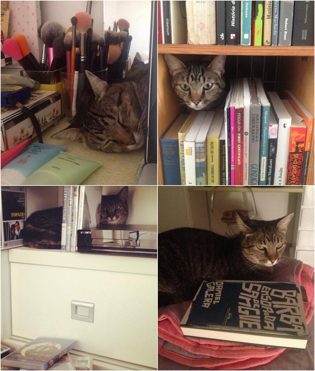 como educar seu gato 1